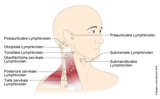Lymphknoten Kopf und Hals