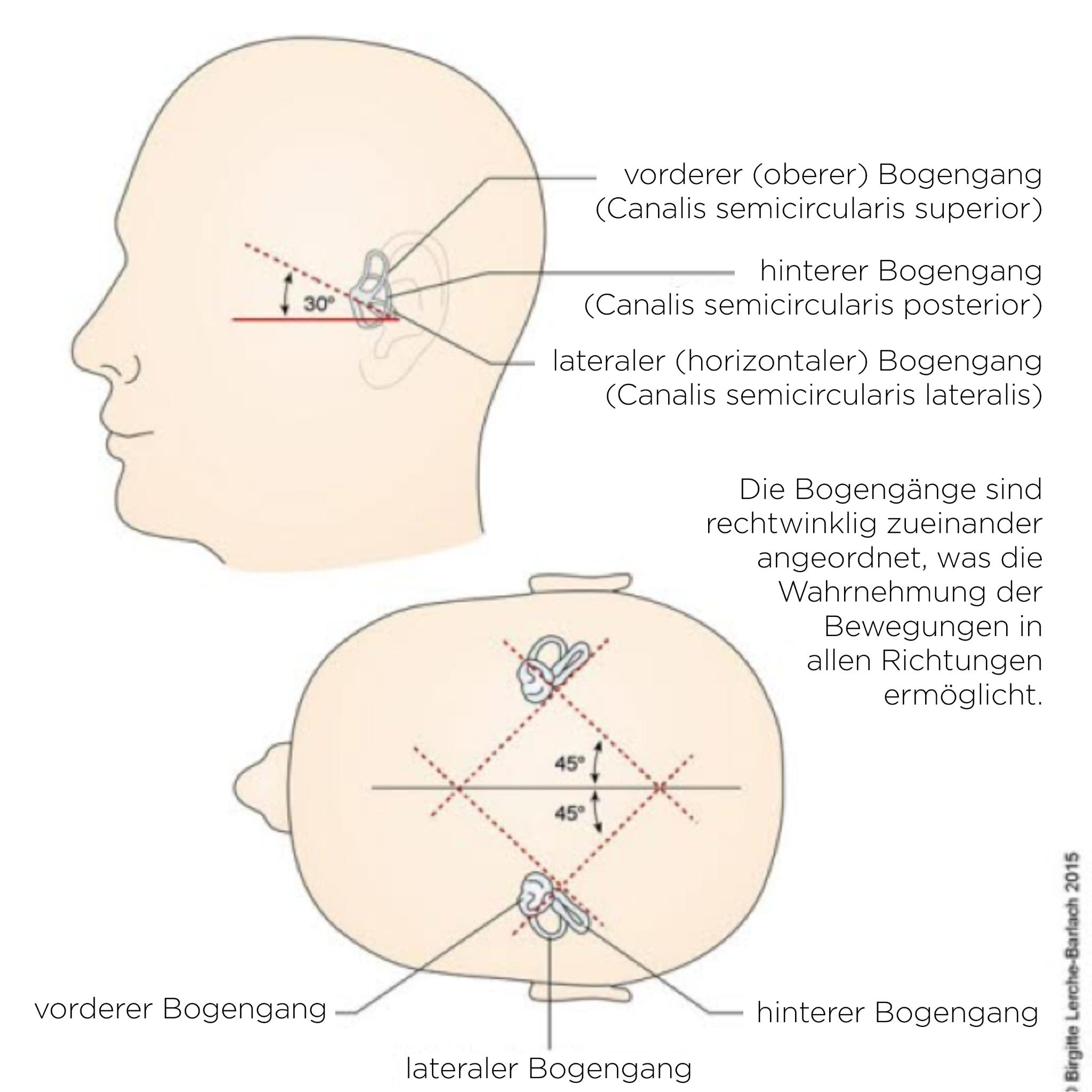 Abb_Bogengänge_34733.png
