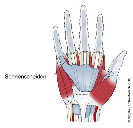 Muskelsehnen der Hand