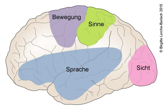 Funktionsareale im Gehirn