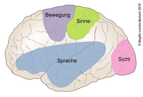 Gehirn, Funktionsbereiche